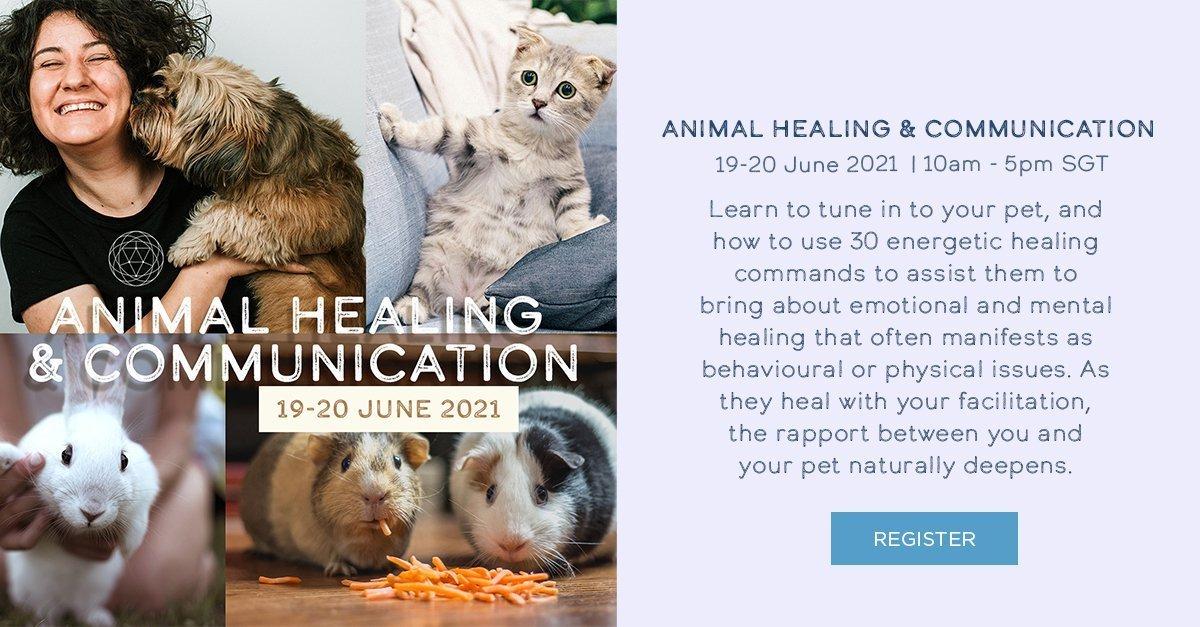 Animal Healing & Communication 1